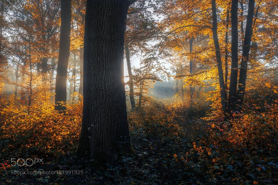 forest by davidgianos