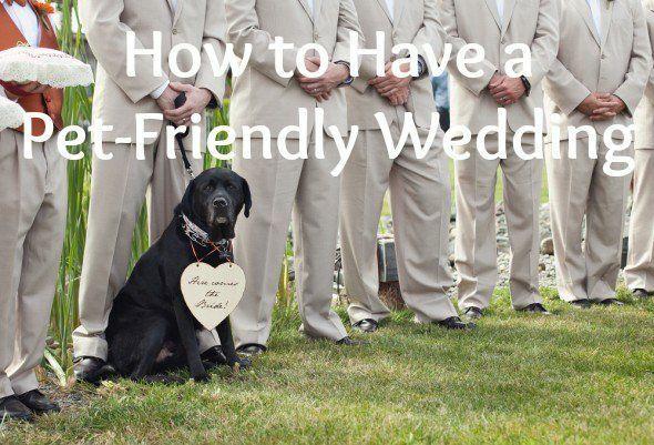 10 Steps To A Pet Friendly Wedding