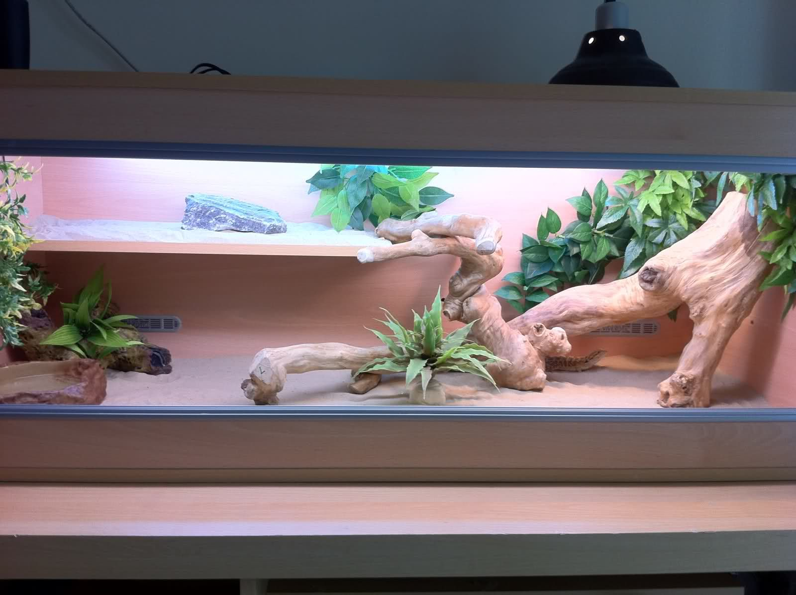 Bearded Dragon Vivarium Decoration Ideas Bearded Dragon Resting On