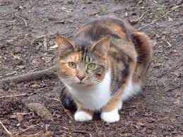 TAWNYTAIL- Tawnytail is a brave she-cat. Her mate, Shadowtail, is deputy. Her kit is Egalekit. Tawnytail only has her sister, Snowtail.