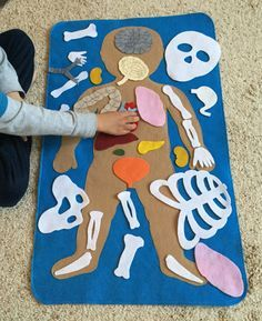 "Educational Felt Human Anatomy/ ""Parts of the Body""/ Human Anatomy Felt Set/Montessori Toy/Science Toy"