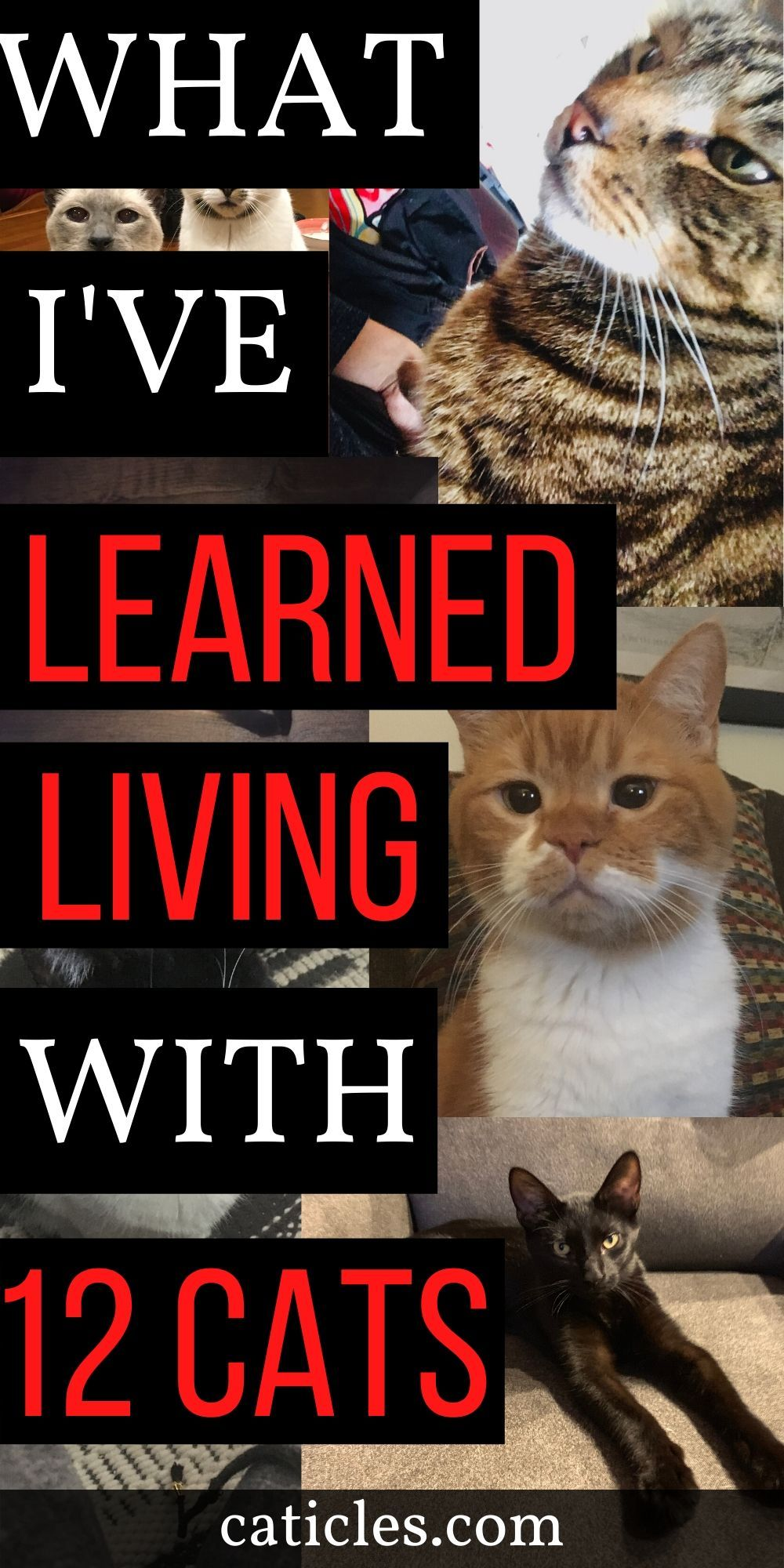 12 Loving Cats Taught Me These Important Things In Life Caticles Cat Problems Kitten Care Cat Care