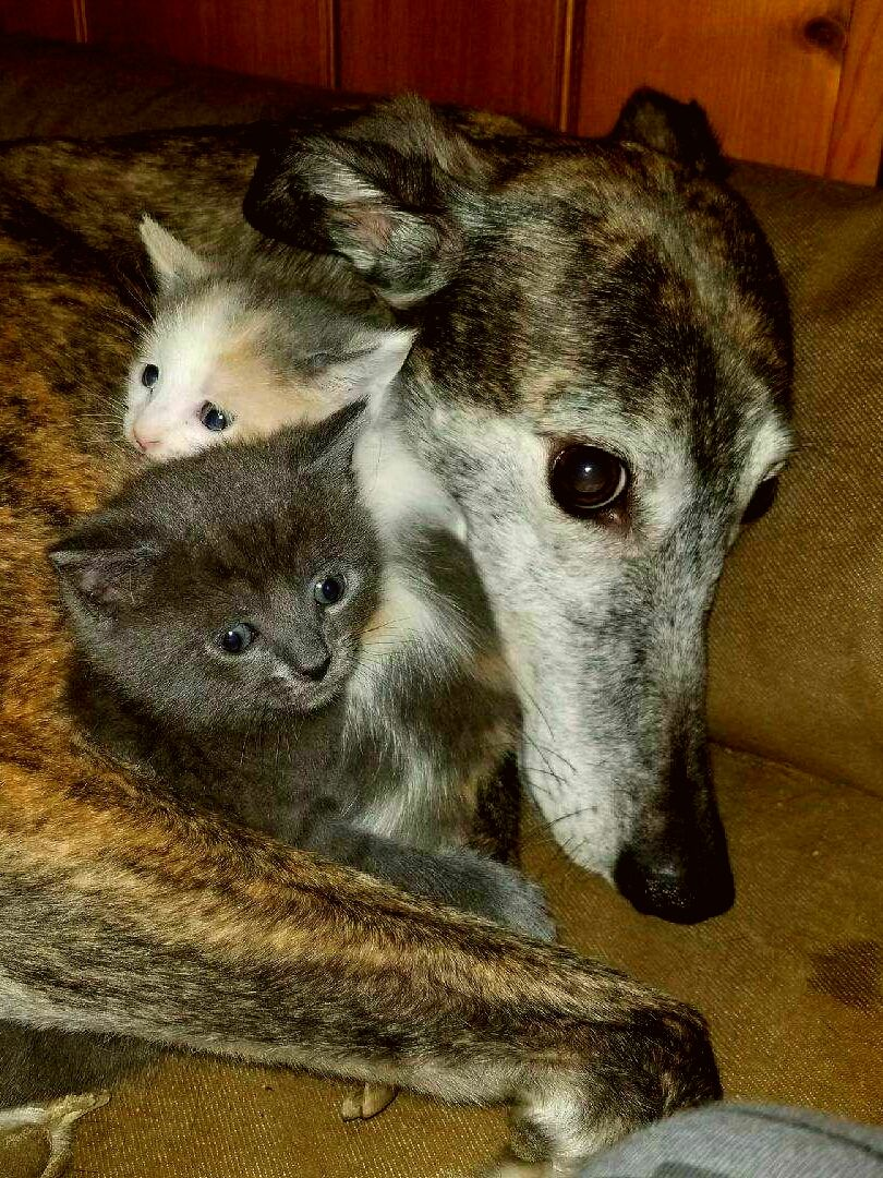 My kittens idd submitted by mattchu to rgreyhounds