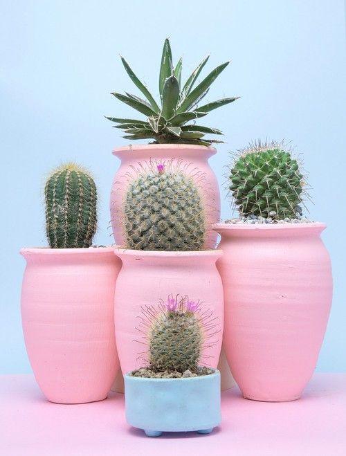Imagen De Pink Cactus And Pastel Plants Succulent Garden
