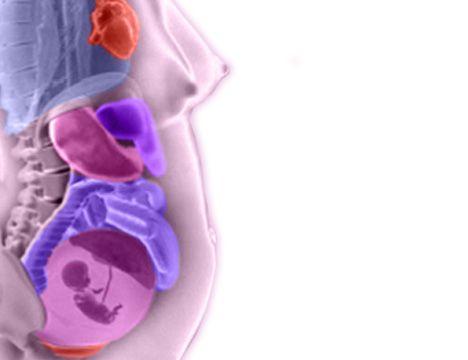 Verdauungssystem Baby Ausgereift