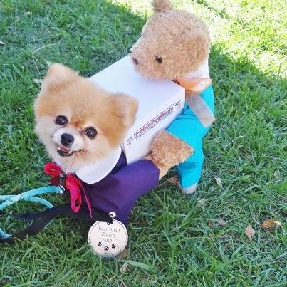 Bella Shares Her Halloween Costume Dog Costumes Small Dog