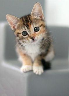 Adorable chaton et chats-bébés de la DECOR-série
