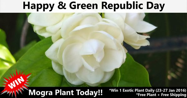 Nurserylive Is Giving Away Plants For Free On This Republic Day 23 27 Jan Subscribe Plants Republic Day Free Plants