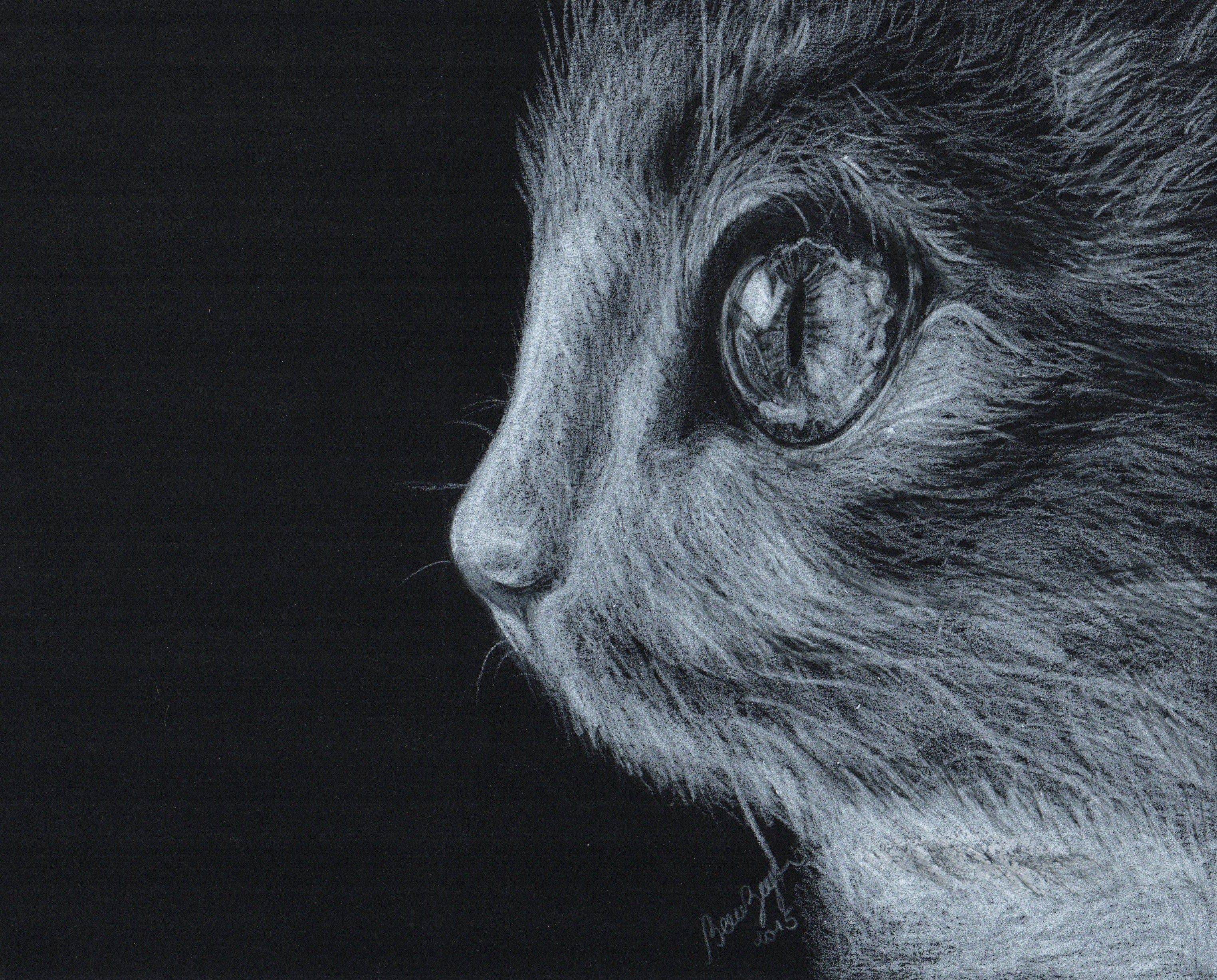 #cat #drawing #desenho #gato
