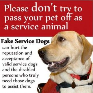 The Hidden Complications Of Fake Service Dogs Service Dogs