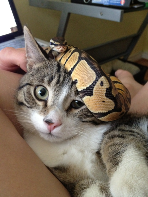 Cute Python Images & Pictures Becuo Cute reptiles