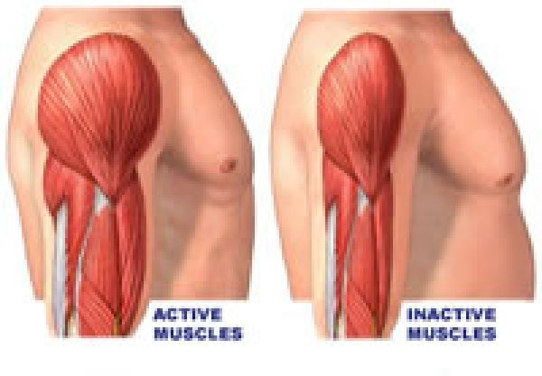 BUILD WEAK MUSCLES AND MUSCULAR ATROPHY   Active & Inactive Muscle