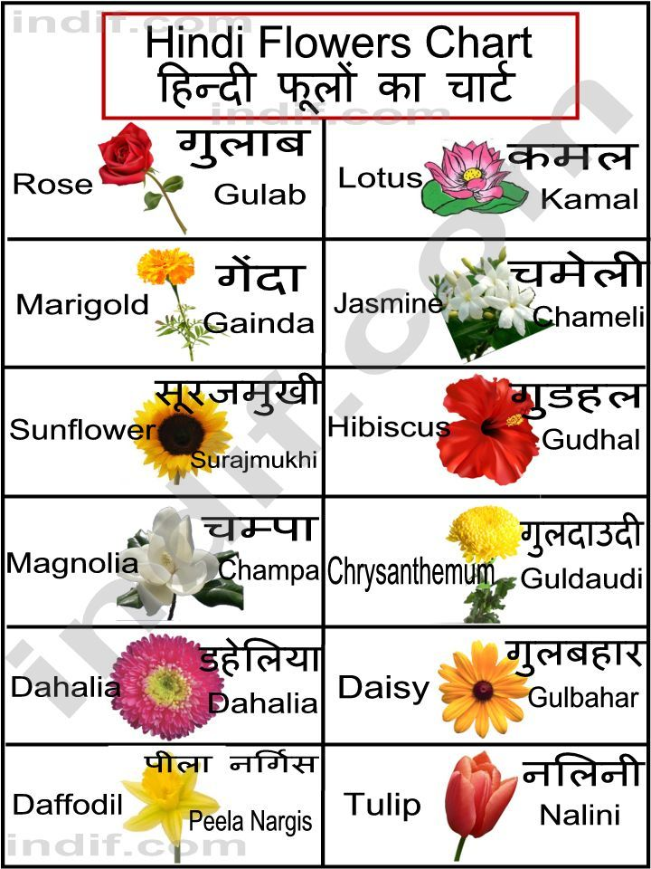 List of Common Flowers To Print this chart right click