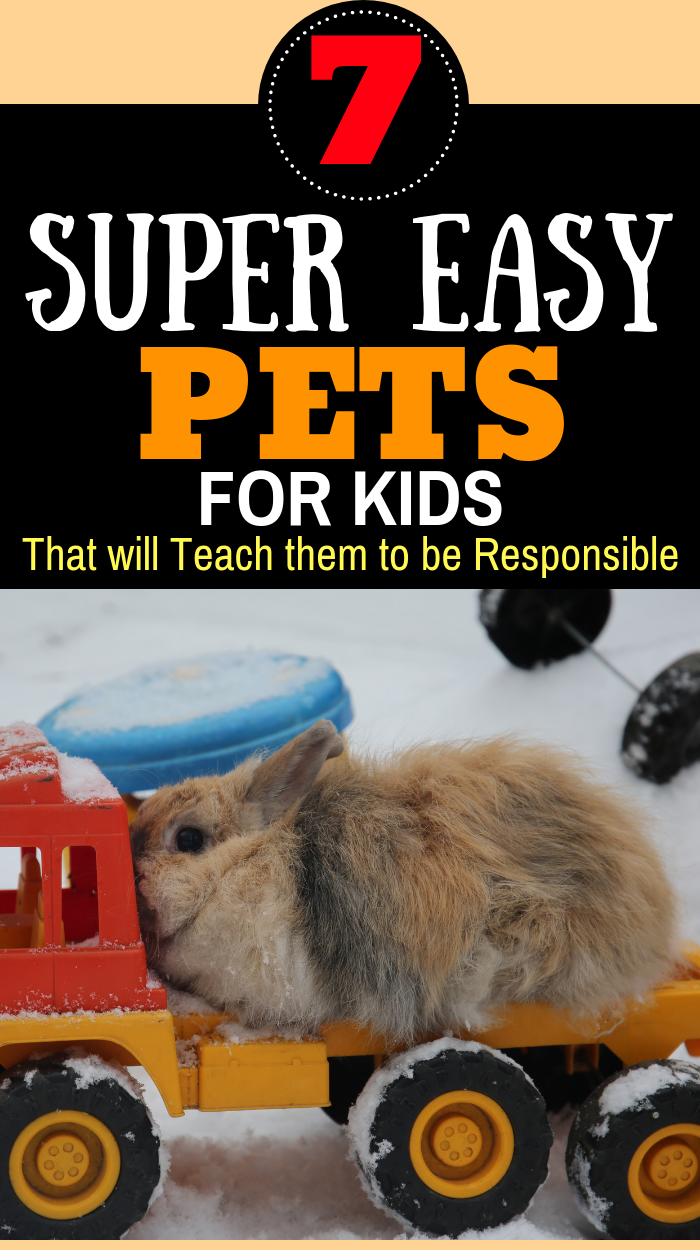 7 Low Maintenance Pets For Kids That Teach Responsibility