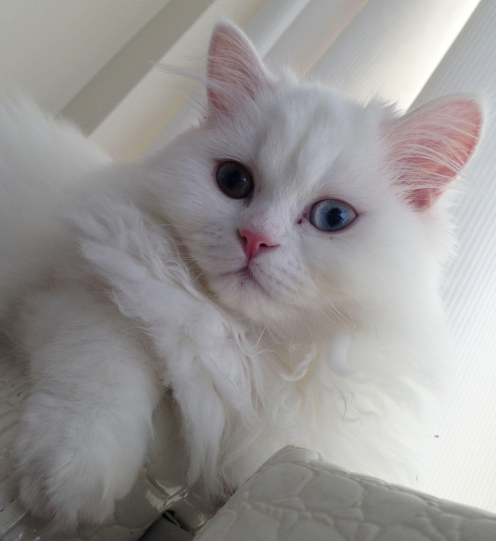 White Cat Poses