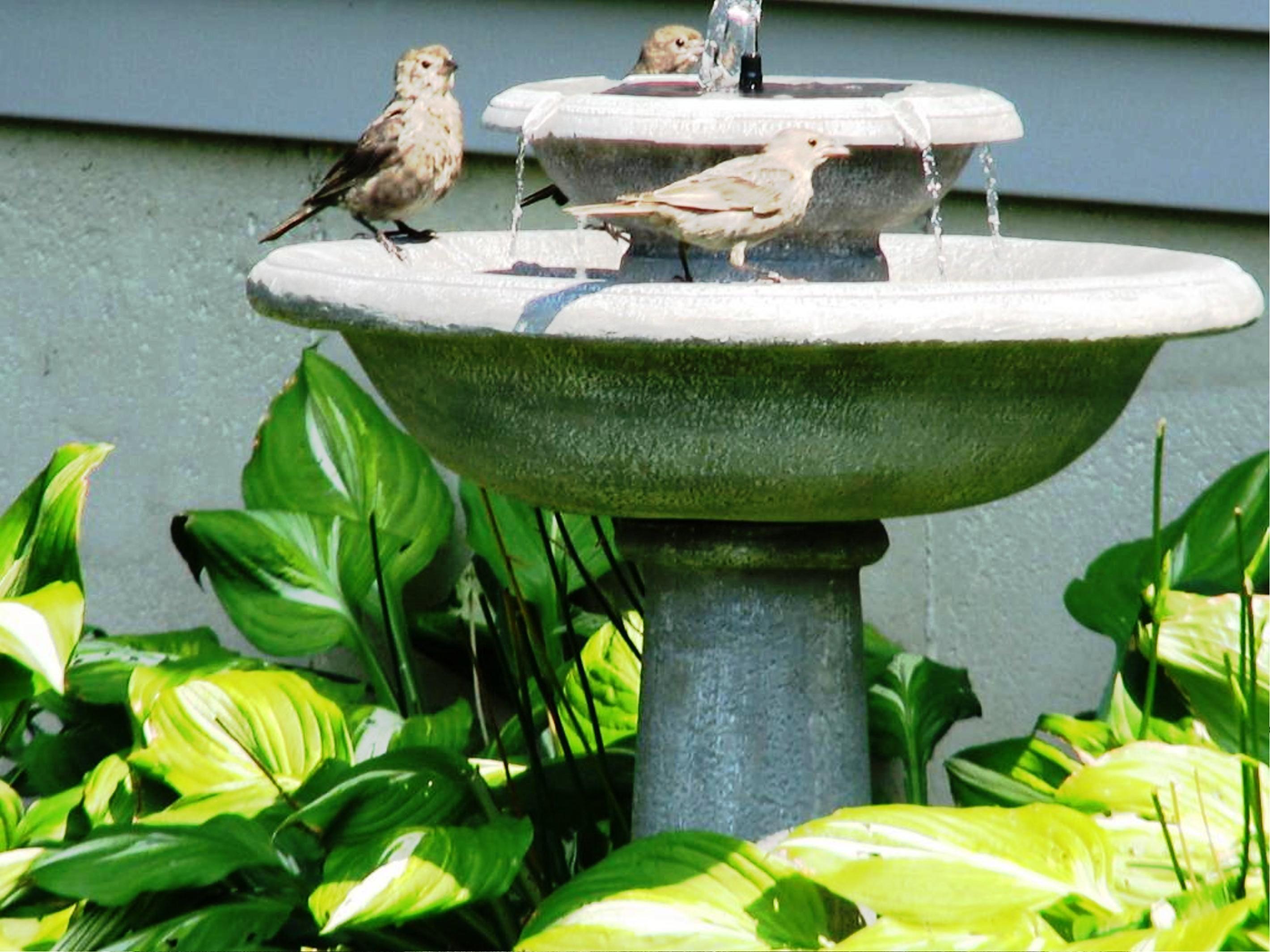 solar water fountain bird bath stone courtyard