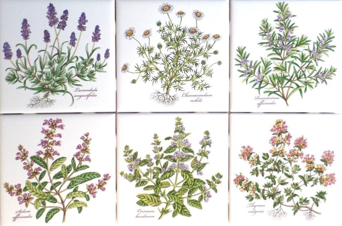 Botanical Herb Ceramic Tile Set 4 Of