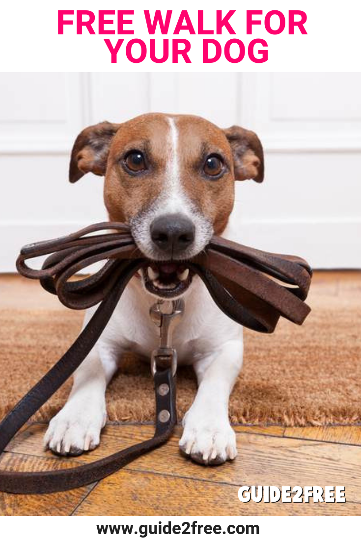Free Walk For Your Dog With Images Puppy Training Dog Training Dog Training Obedience