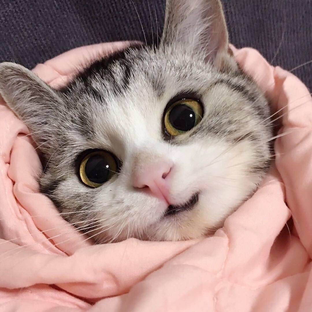Happy Kitty In The Pink Blanket Kittens Cutest Cute Cats Cute Animals