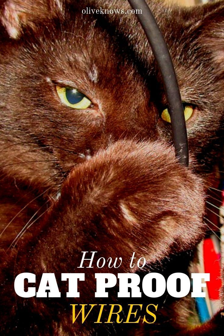 How to Cat Proof Wires How to cat, Cats, Raising kittens