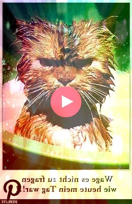 es nicht zu fragen wie heute mein Tag war Wage es nicht zu fragen wie heute mein Tag warWage es nicht zu fragen wie heute mein Tag war Top 5 Cat Videos We Saw On Instagra...