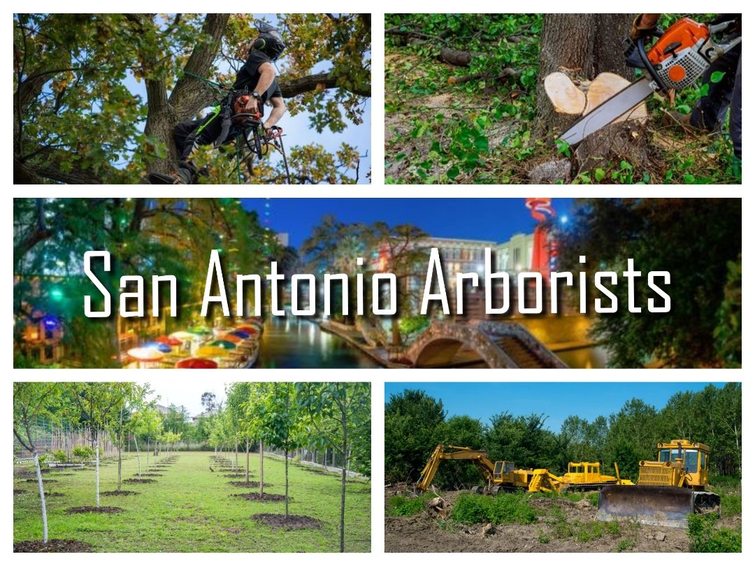 Arboristsnearme Provides Certified and Trusted San Antonio