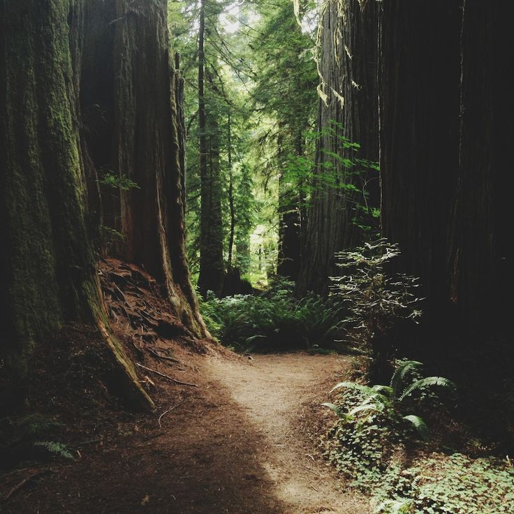 If only I could see a forest like this!