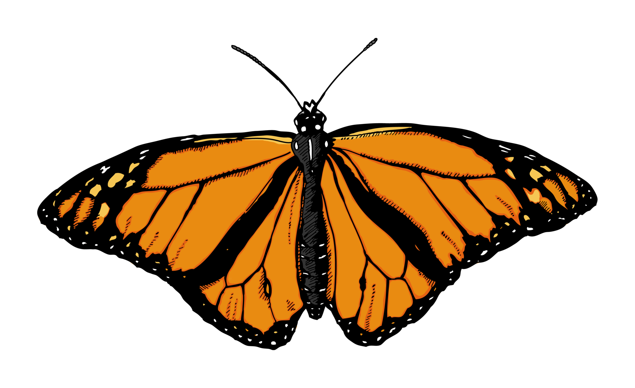 Butterfly Garden Buy Art Print Butterfly Illustration Png Images