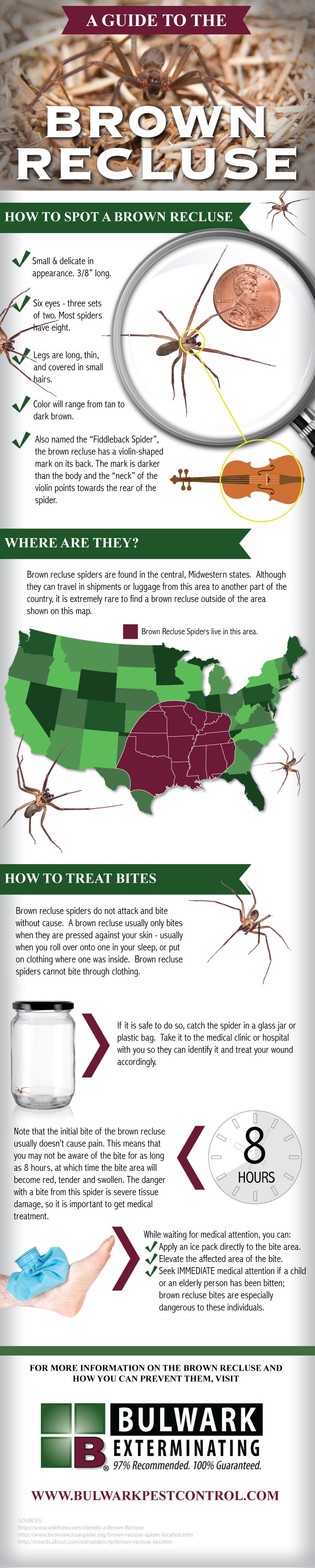 Infographic Brown Recluse Guide Bulwark Exterminating Brown Recluse Spider Brown Recluse Recluse Spider