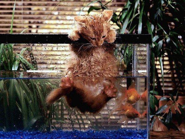funny-animals-cat-photos.jpg (596×447)