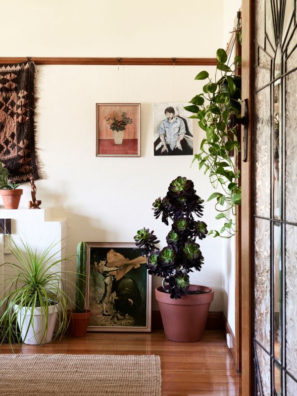 Lilli waters and jake cole also best decor ideas images indoor house plants living room rh pinterest