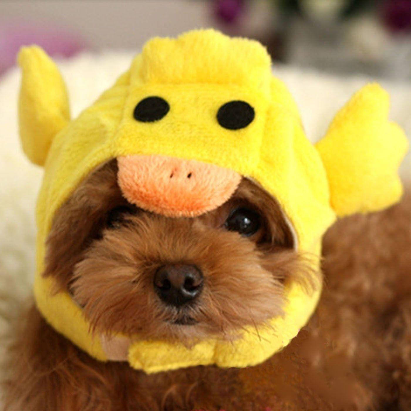 Robot Check Pet Costumes Cat Colors Dog Hat