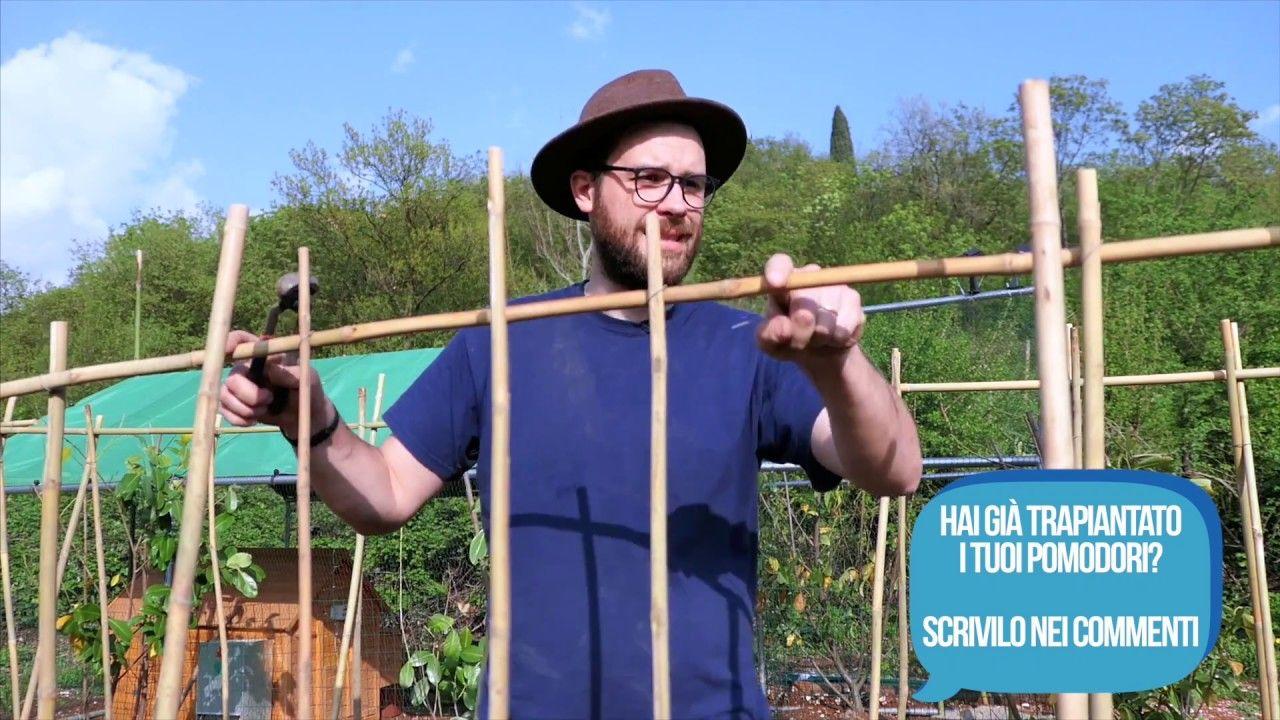 Sostegni Per Pomodori In Vaso coltivare i pomodori: concime, sostegno a casetta e