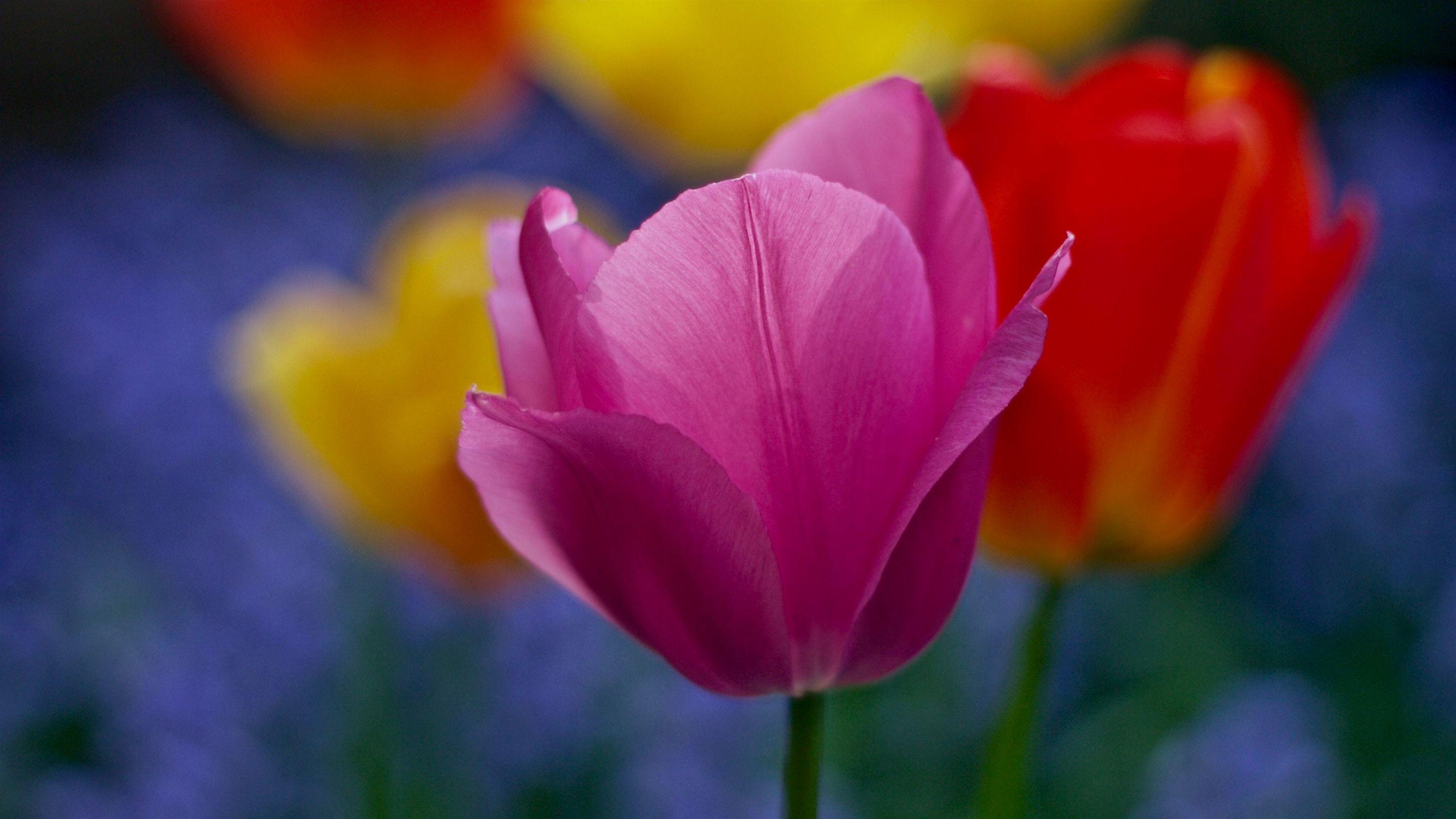 Gardening Guide For Zone 8 1234 20191114082927 53 Gardening