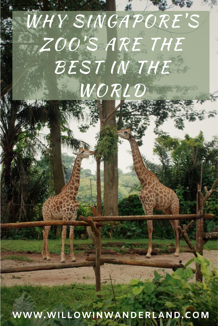 Why Singapore S Zoo S Are The Best In The World Willow In Wanderland Singapore Zoo Singapore Singapore Travel