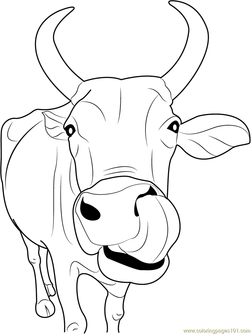 Cow Coloring Pages - 151 Cow printable pages and coloring sheets ...