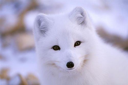 Paul Nicklen - Northwest Territories