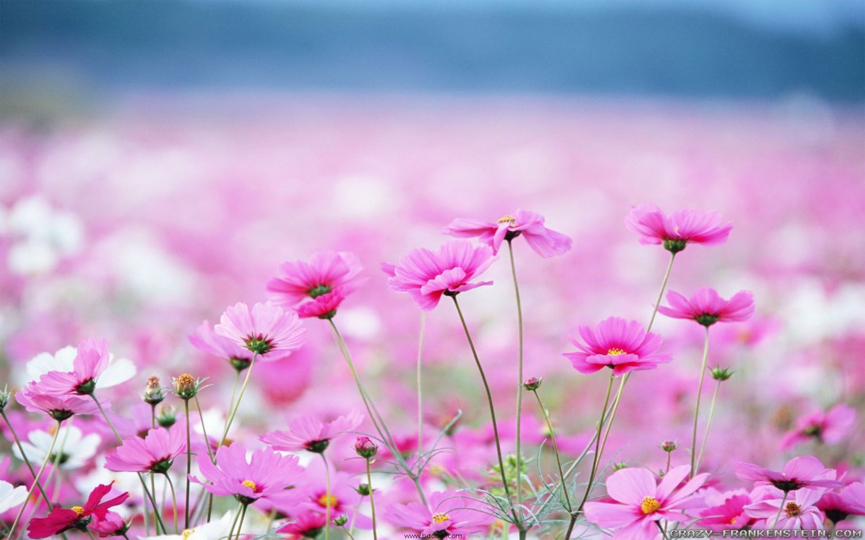 Flowers sceneries wallpapers android pinterest scenery and flowers sceneries wallpapers izmirmasajfo