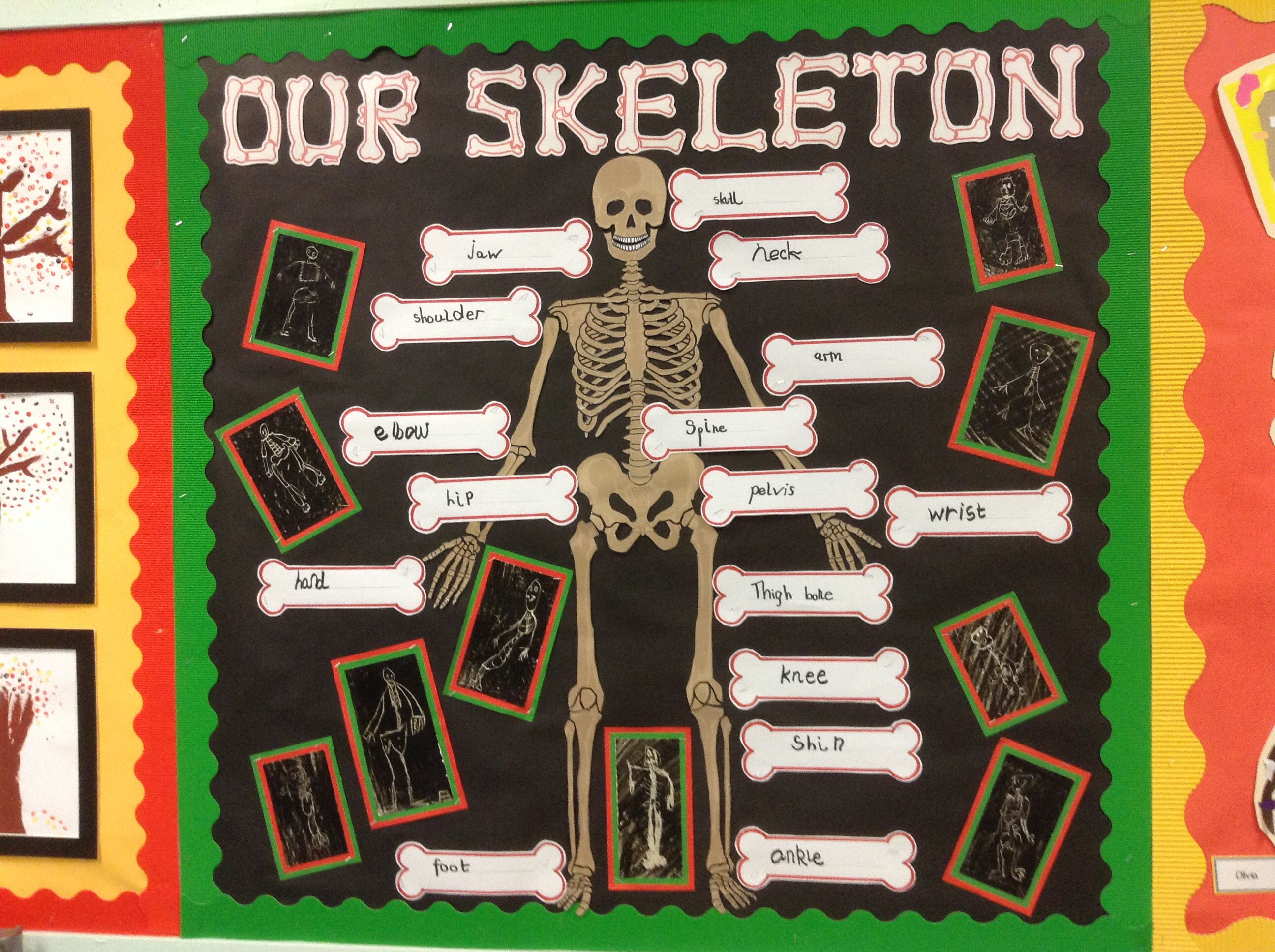 The Children Wrote Labels For Our Skeleton Twinkl And I