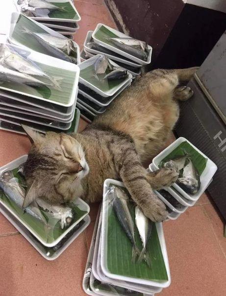 Фотография | Смешные фото кошек, Самые милые животные ...