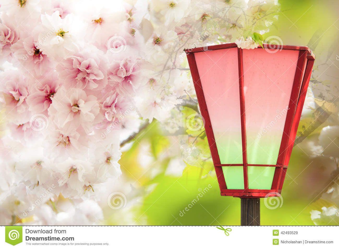 Resultado de imagem para flores de kyoto