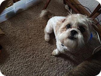 Adopt 2 Available 5 Yrs On Petfinder Dog Pounds Dog Adoption Animals
