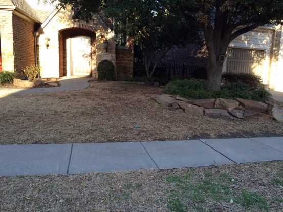 Blog Before And After Lawn Transition St Augustine To Zoysia Soils Alive Inc Organic L Our Blog Organics Lawn Care Garden Tips More Organic Lawn Care Lawn Care Lawn