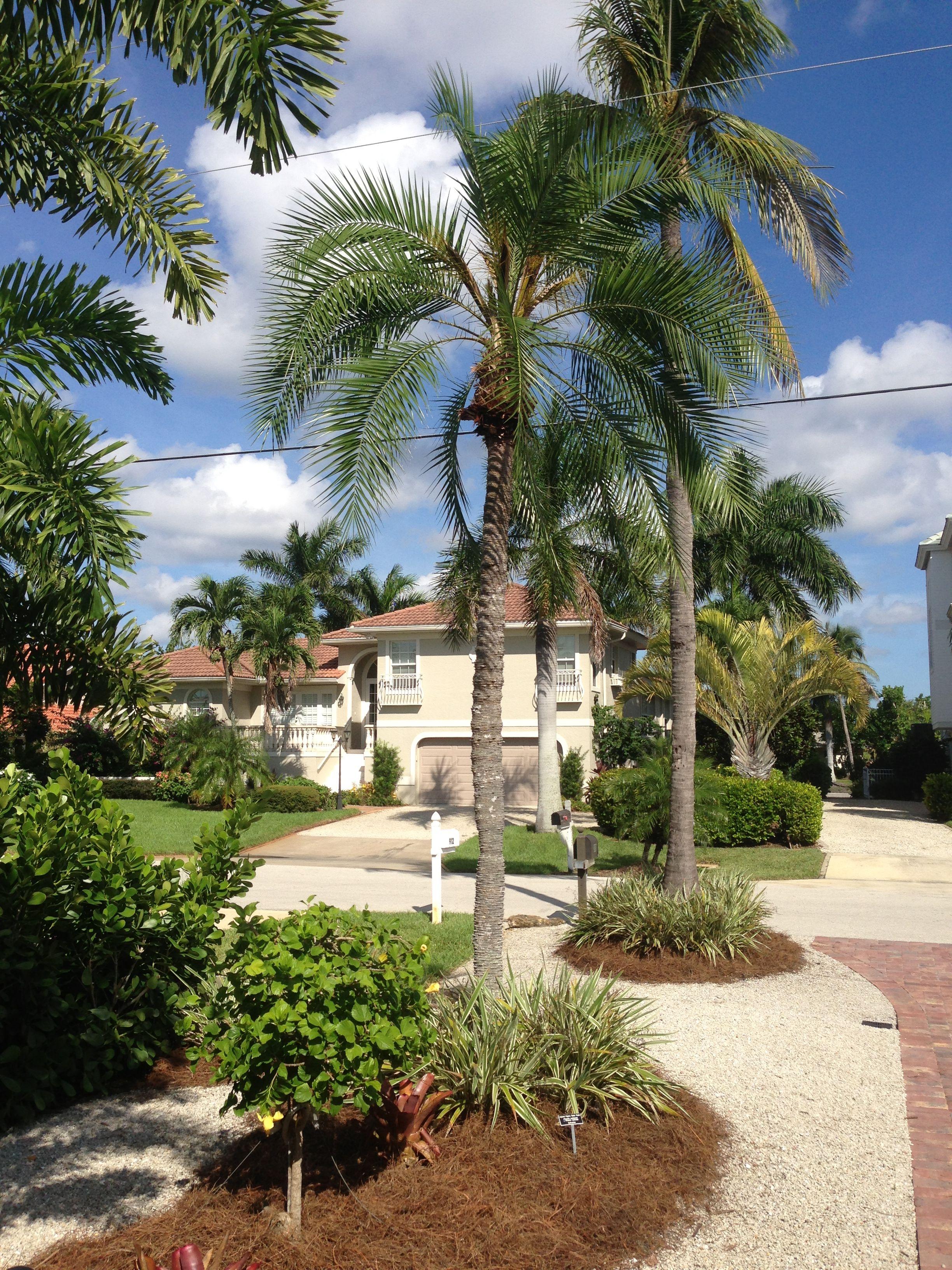 Rock Landscape Florida, Low Water Landscape, Sanibel Native Landscape