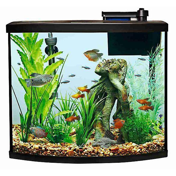 Top Fin® Allure Bow Front Aquarium Starter Kit fish
