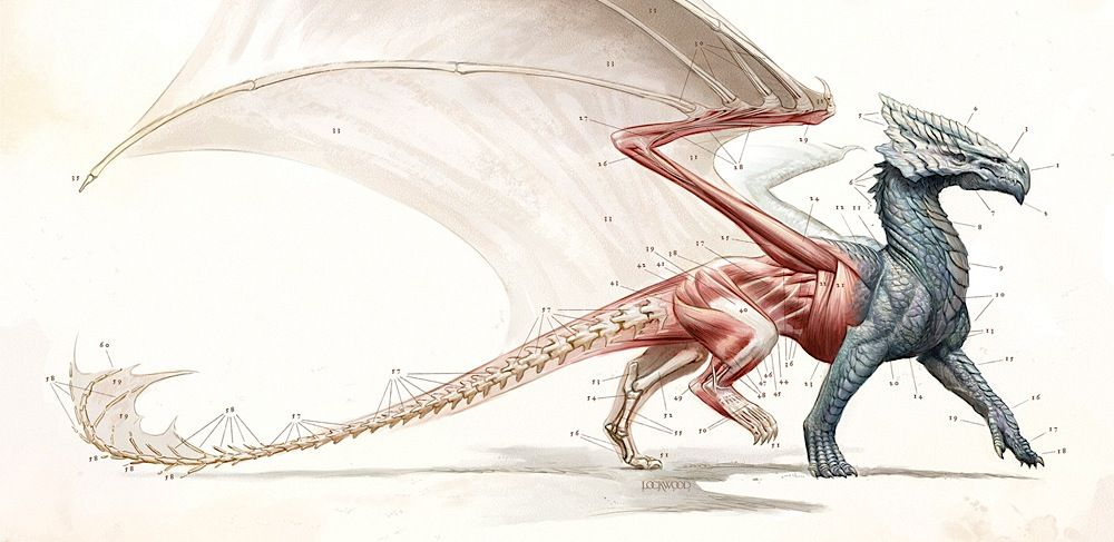 dragon, anatomia, ilustracion   Ilustracion   Pinterest   Anatomía ...