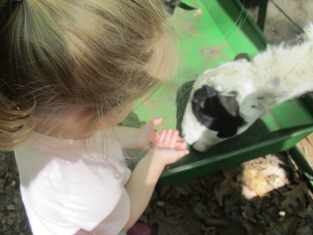 Feed goats Green Meadows Petting Farm A Jersey Mom's