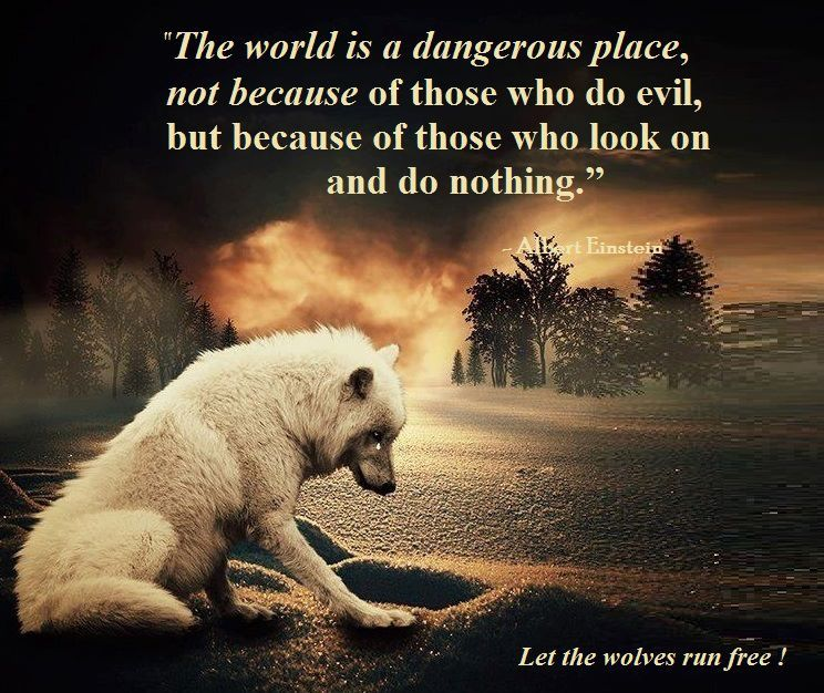 the world is not a dangerous This is the most dangerous time for our planet so taken together we are living in a world of widening, not stephen hawking: i fear i may not be welcome in.