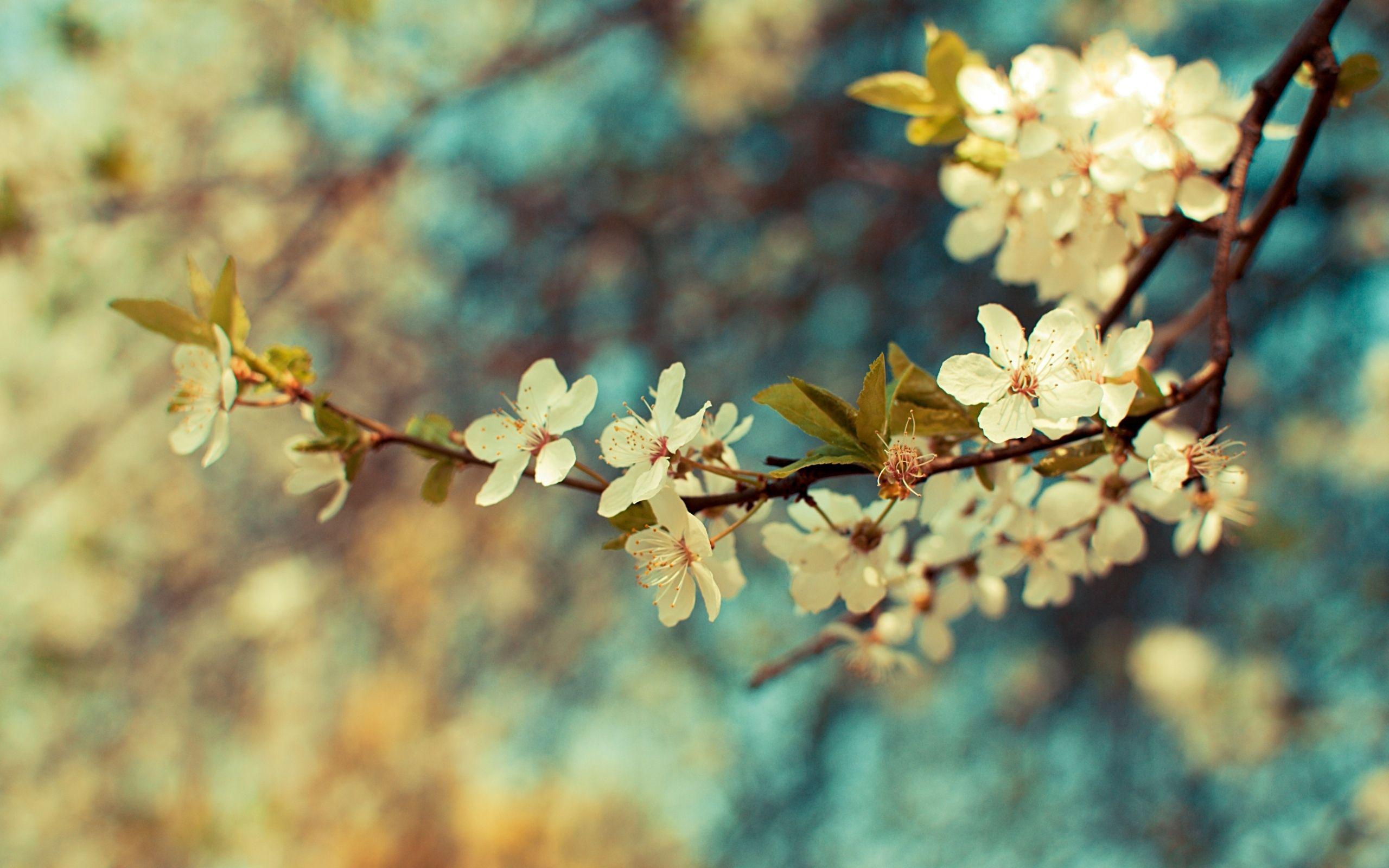 Download Wallpaper Branch Branch Flowers Spring Free Desktop