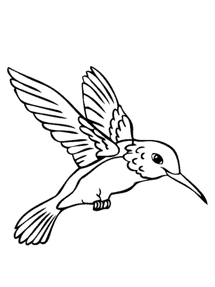 Coloring Pages Of A Bird The Following Is Our Bird Coloring Page Collection You Are Free To Download And M Kolibri Risunok Risunok Ptic Raskraski S Zhivotnymi
